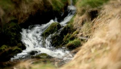 Glenfiddich Spring